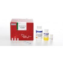 MEGAquick-spin plus Fragment DNA Purification Kit