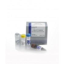 E-Myco VALiD-qPCR Mycoplasma Detection kit